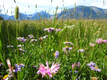 Flora: Bee balm and wild oregano
