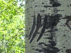 Bear tag